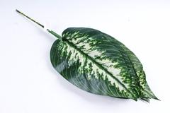Диффенбахия лист (12 шт в уп) h=50 см.