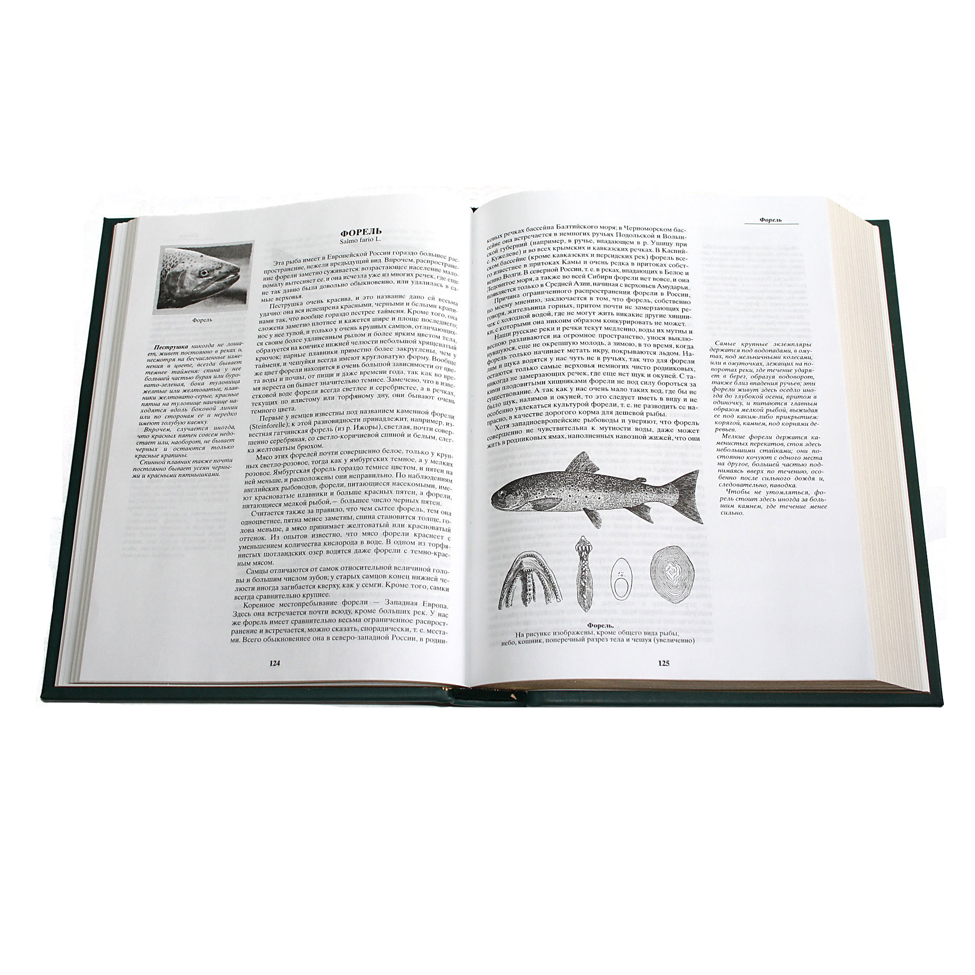 """Книга """"Жизнь и ловля пресноводных рыб"""", подарочная - 3"""
