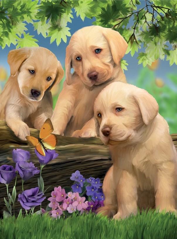 Картина раскраска по номерам 40x50 Три милых щеночка ...