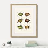 Марк Кейтсби - Assorted Beetles №11, 1735г.