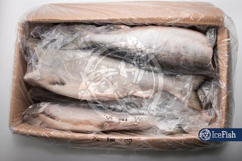 Кета потр. б/г (1/25) Salmonica