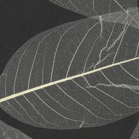 Обои York Designer Resource Grasscloth SE1800, интернет магазин Волео