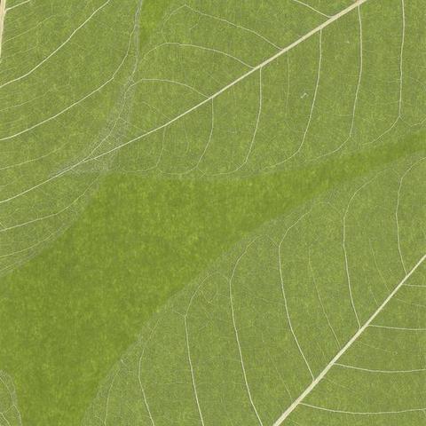 Обои York Designer Resource Grasscloth SE1802, интернет магазин Волео