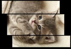 """Модульная картина """"Пушистый котенок"""""""