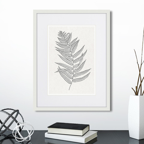 - The fern collection №4