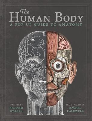 Kitab The Human Body: A Pop-Up Guide to Anatomy   Richard Walker