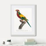 Джон Гульд - Beautiful parrots №7, 1872г.