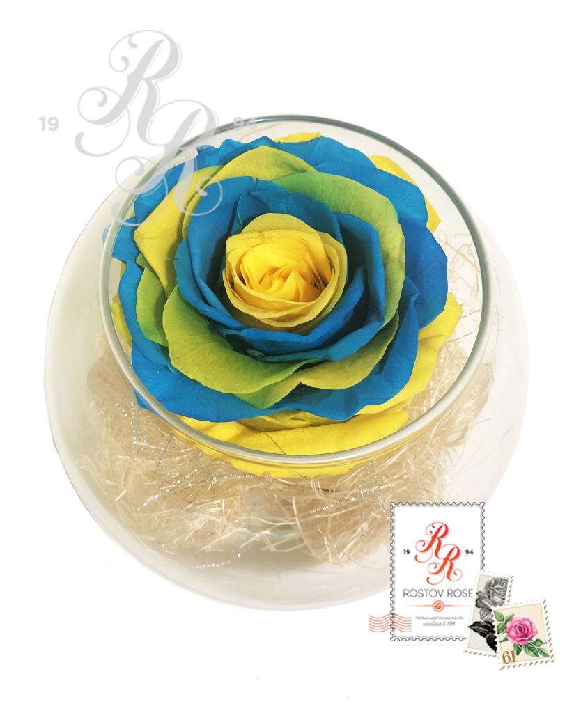 Роза желто-голубая в бокале