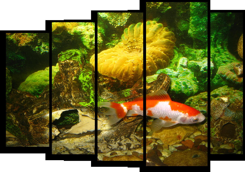 """Животные Модульная картина """"Морской обитатель"""" М351.png"""
