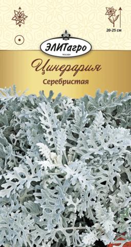 Семена Цинерария Серебристая