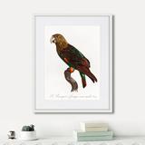 Джон Гульд - Beautiful parrots №3, 1872г.