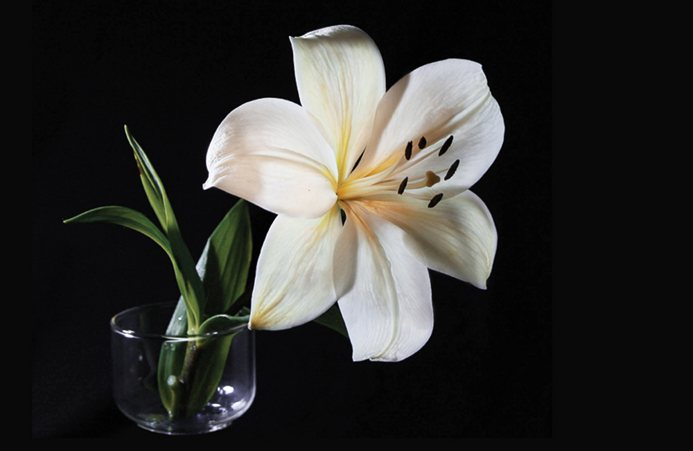 Папертоль Белая лилия — главное фото сюжета.