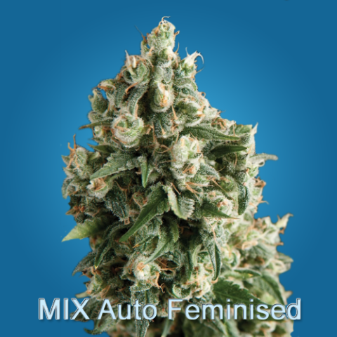 MIX Auto Feminised