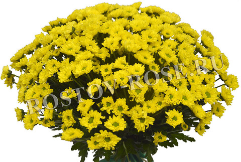 Сантини желтые
