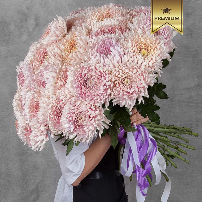Хризантема шар Холидей розовая персиковая купить в Перми