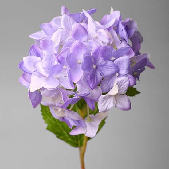 Гортензия фиолетовая 2Т-100-1