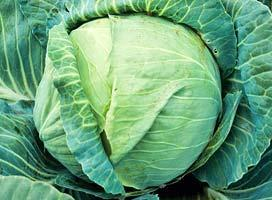 Белокочанная Килатон F1 семена капусты белокочанной (Syngenta / Сингента) Килатон_F1.jpg