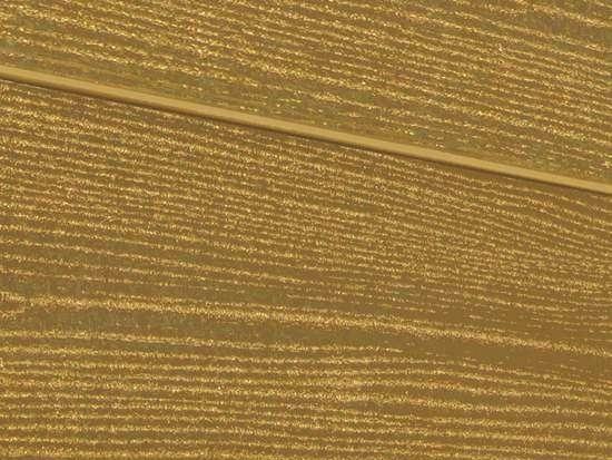Террасная доска SW Padus (R) - радиальный распил. Цвет тик.
