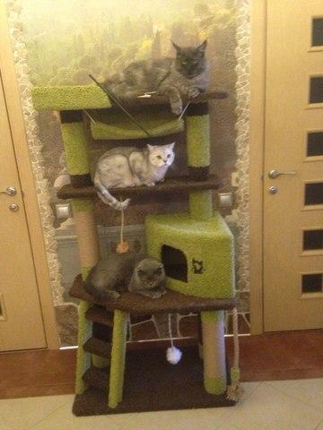 Домик для кошки И-8