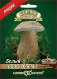Белый гриб Дубовый на субстрате