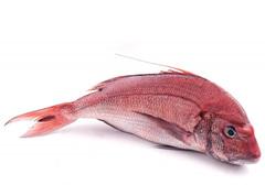 Красный пагр охлажденный~1.2кг
