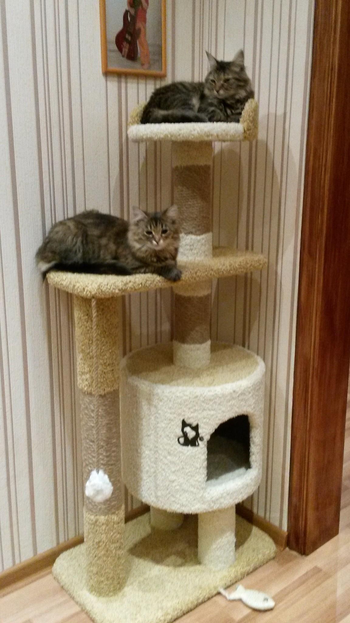 разные картинки домов для кошек по шагово осени сдвинется ростове