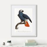 Джон Гульд - Beautiful parrots №5, 1872г.