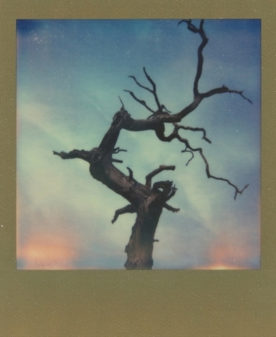 Creepy tree (Danny Edwards)