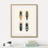 Марк Кейтсби - Assorted Beetles №5, 1735г.