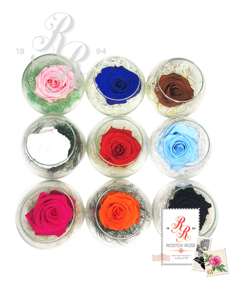 Роза бирюзово-фиолетовая в бокале