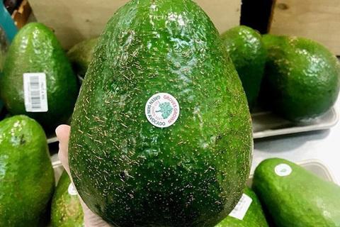 Авокадо Гигантское, 1 кг