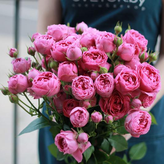 Розы кустовые пионовидные розовые Мисти Баблс купить в Перми
