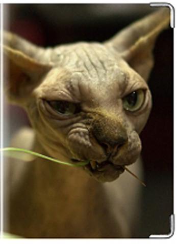 """Обложка для ветеринарного паспорта """"Сфинкс"""" (6)"""