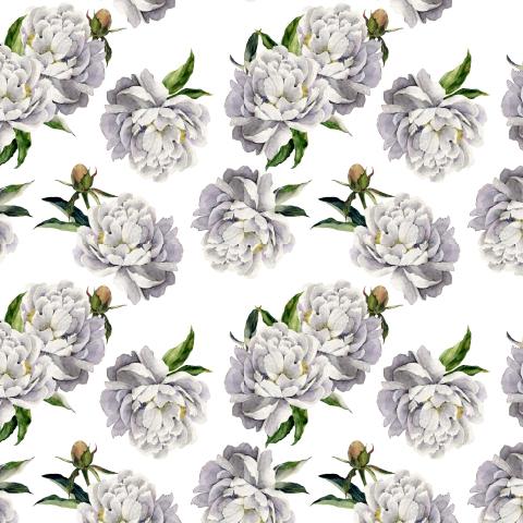 Белые пионы на белом фоне