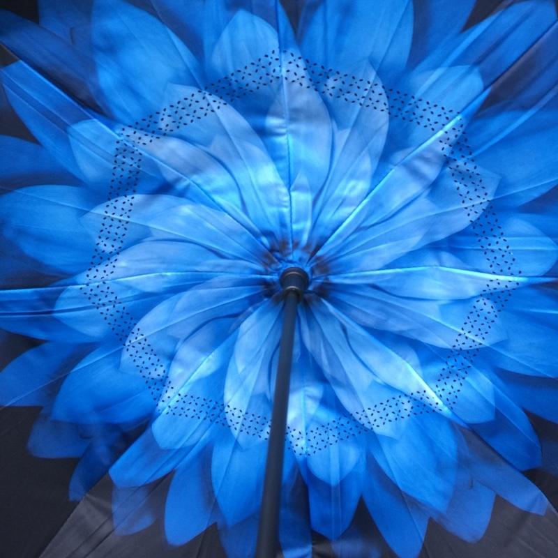 Голубая хризантема