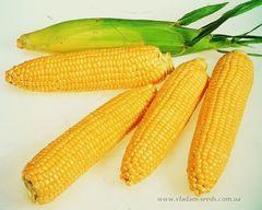 Леженд F1 семена кукурузы, (Clause / Клос)