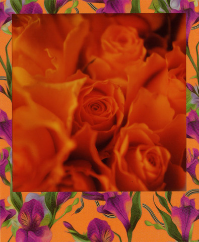 Retro Roses (Joep Polaroid Photography)