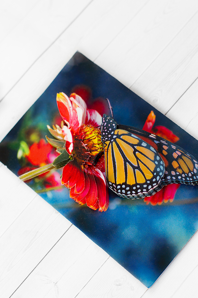 Бабочка на гербере - готовая работа, детали сюжета.
